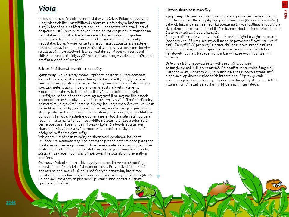 Viola zpět Listová skvrnitost macešky