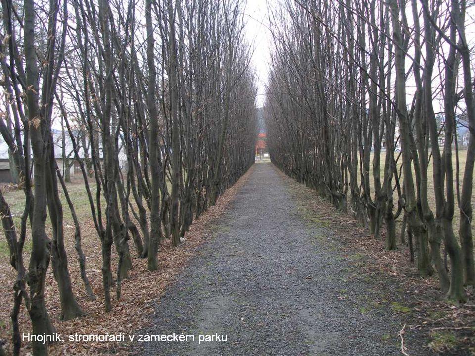 Hnojník, stromořadí v zámeckém parku