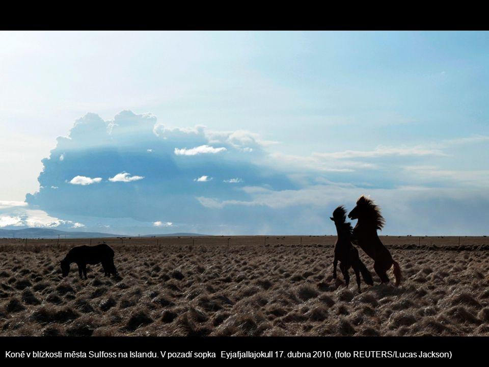 Koně v blízkosti města Sulfoss na Islandu