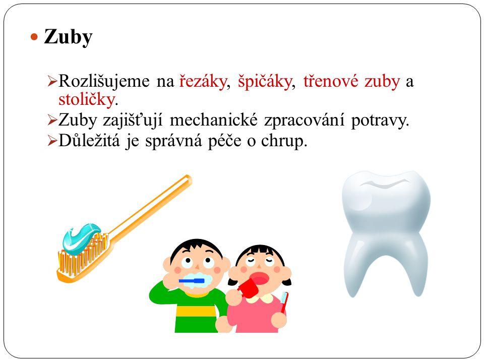Zuby Rozlišujeme na řezáky, špičáky, třenové zuby a stoličky.
