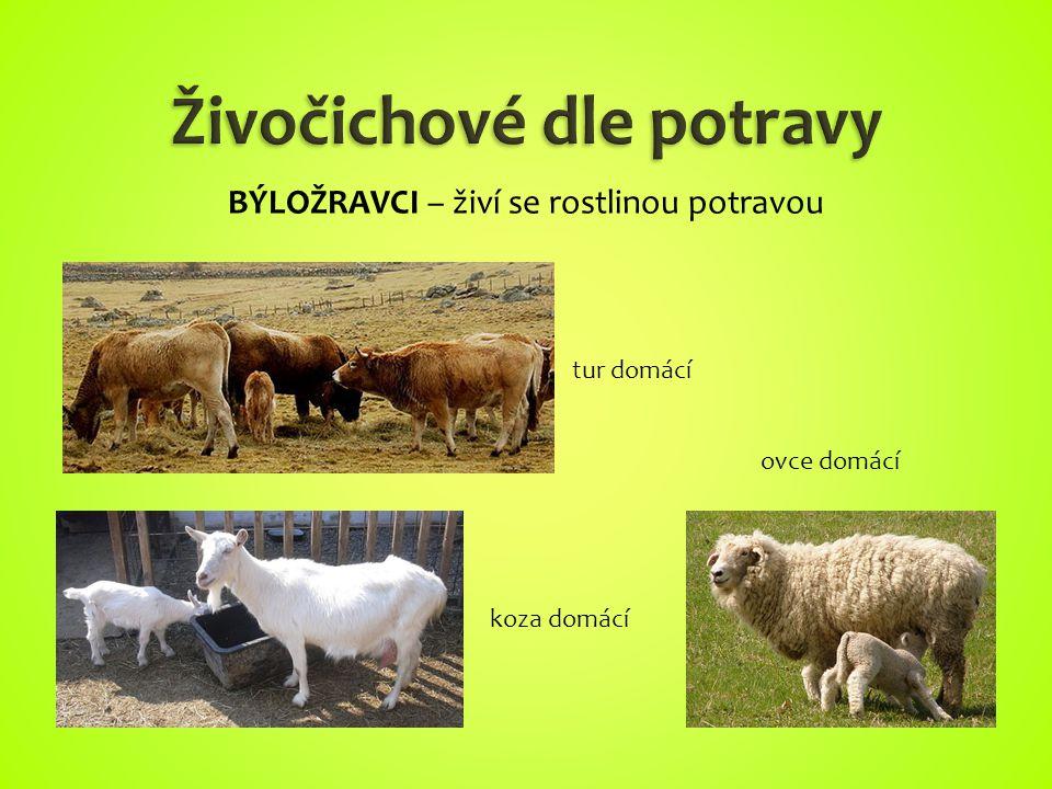 Živočichové dle potravy