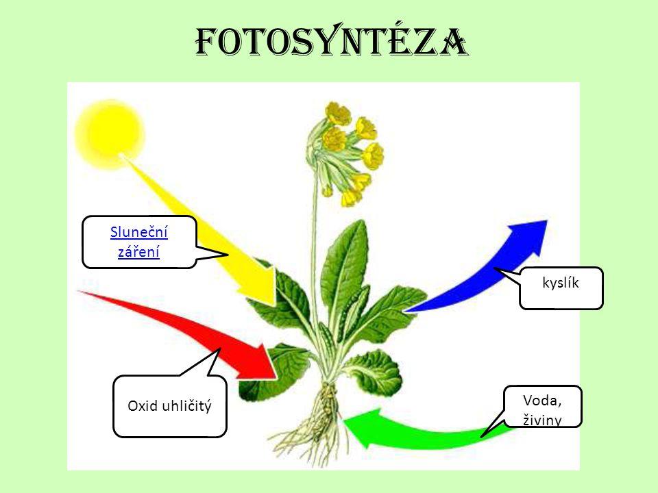 fotosyntéza Sluneční záření kyslík Oxid uhličitý Voda, živiny