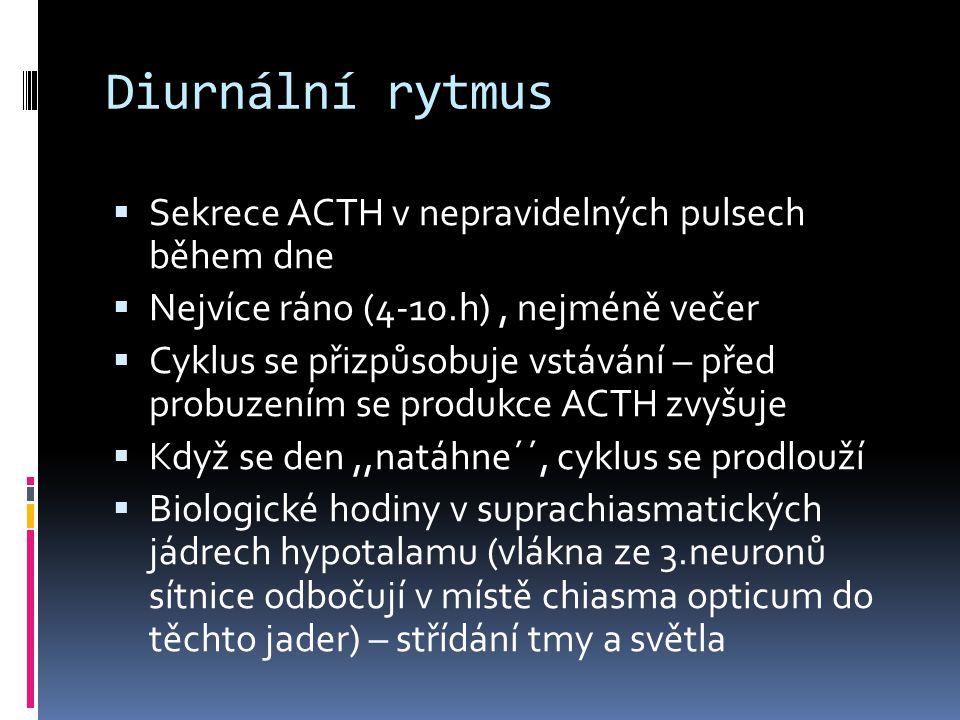 Diurnální rytmus Sekrece ACTH v nepravidelných pulsech během dne