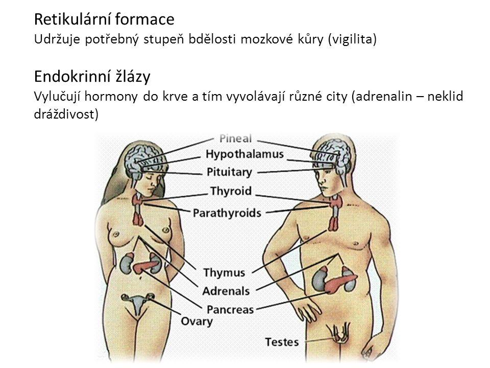 Retikulární formace Endokrinní žlázy