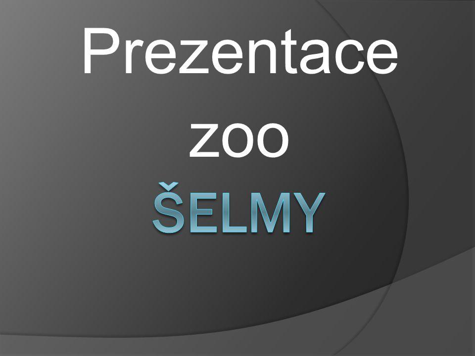 Prezentace zoo ŠELMY