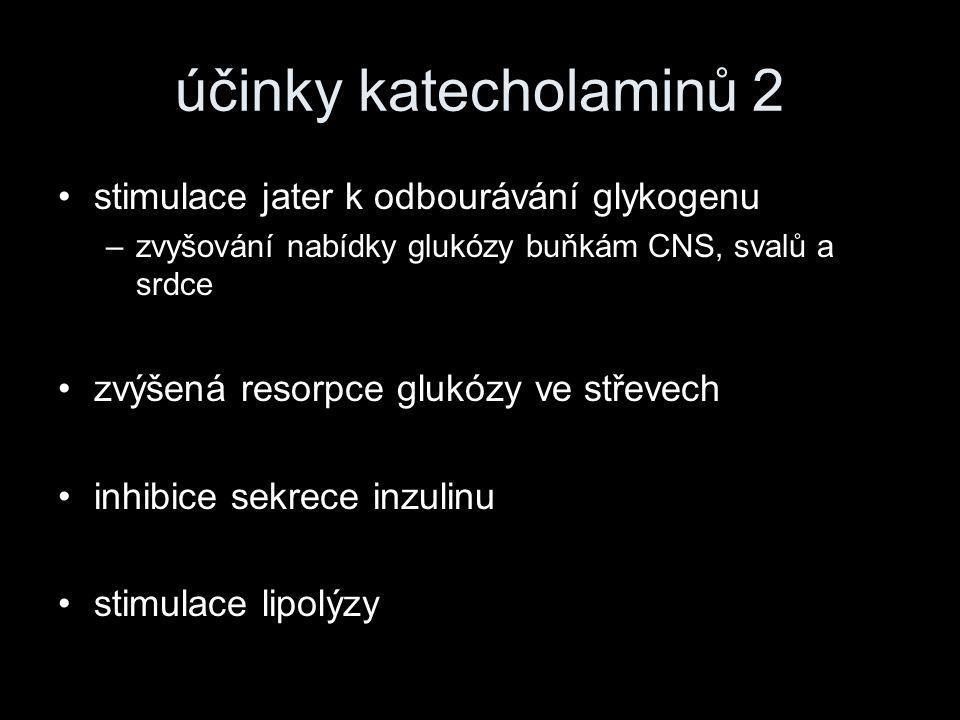 účinky katecholaminů 2 stimulace jater k odbourávání glykogenu