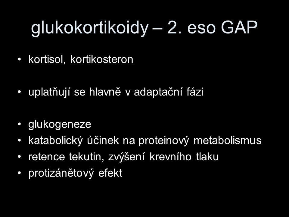 glukokortikoidy – 2. eso GAP
