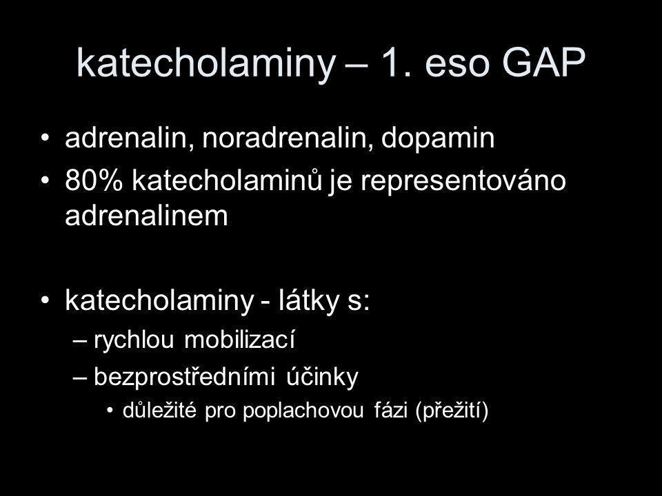 katecholaminy – 1. eso GAP