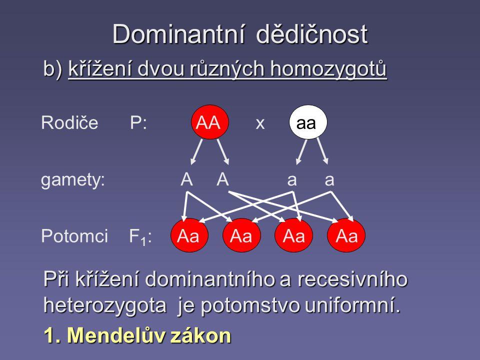Dominantní dědičnost b) křížení dvou různých homozygotů