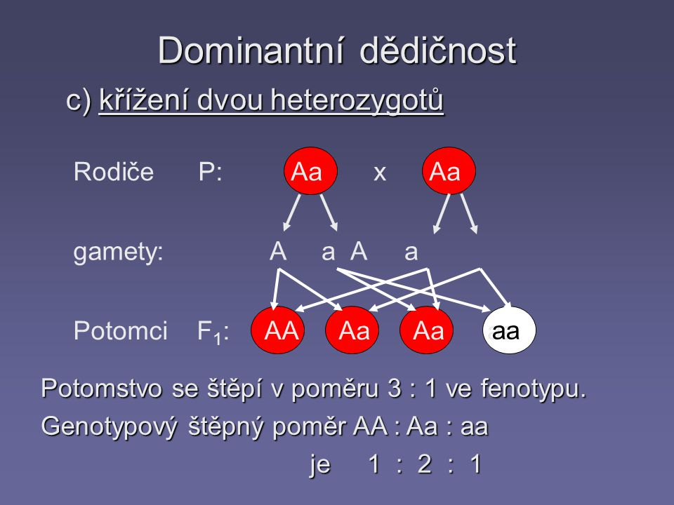 Dominantní dědičnost c) křížení dvou heterozygotů Rodiče P: Aa x Aa