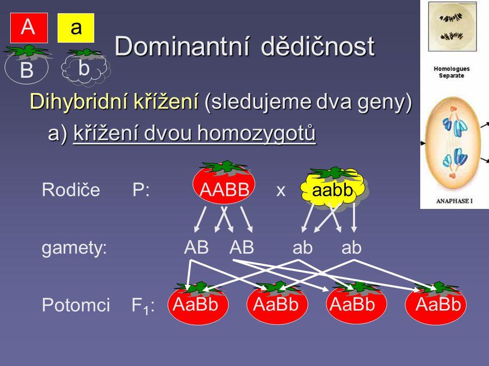 Dominantní dědičnost A a B b Dihybridní křížení (sledujeme dva geny)