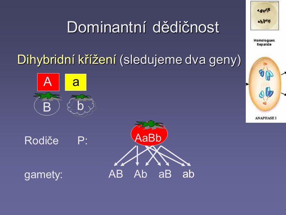 Dominantní dědičnost Dihybridní křížení (sledujeme dva geny) A a B b