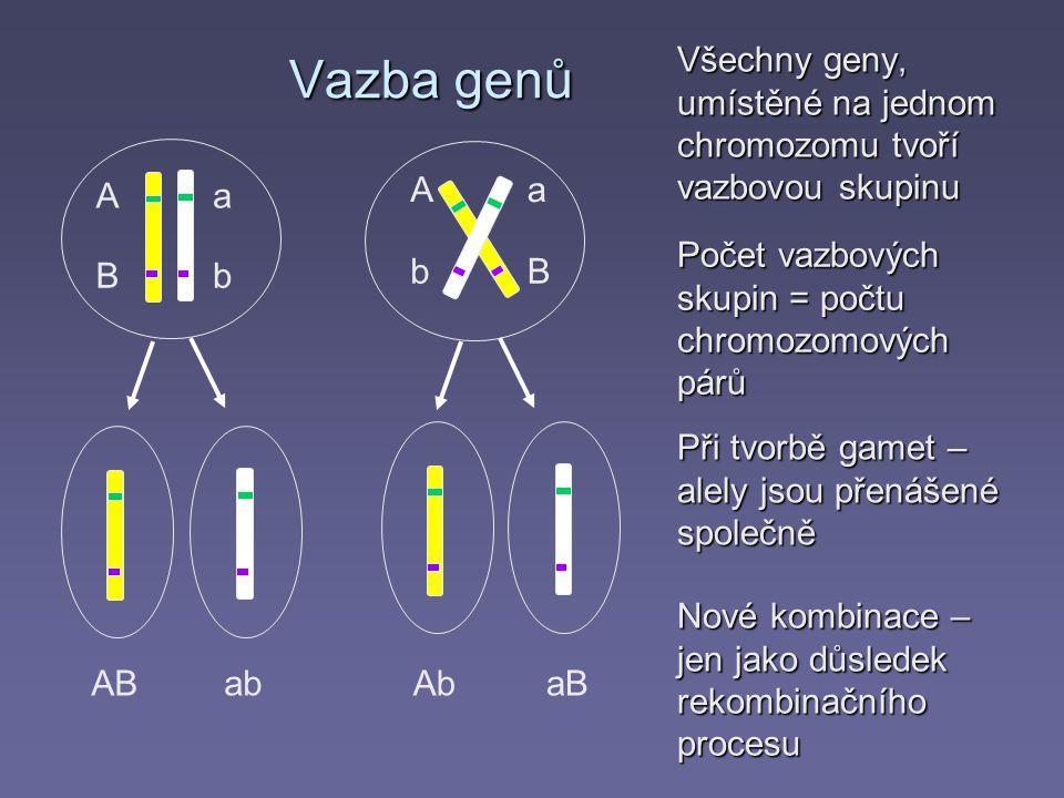 Vazba genů Všechny geny, umístěné na jednom chromozomu tvoří vazbovou skupinu. A. a. A. a. Počet vazbových skupin = počtu chromozomových párů.
