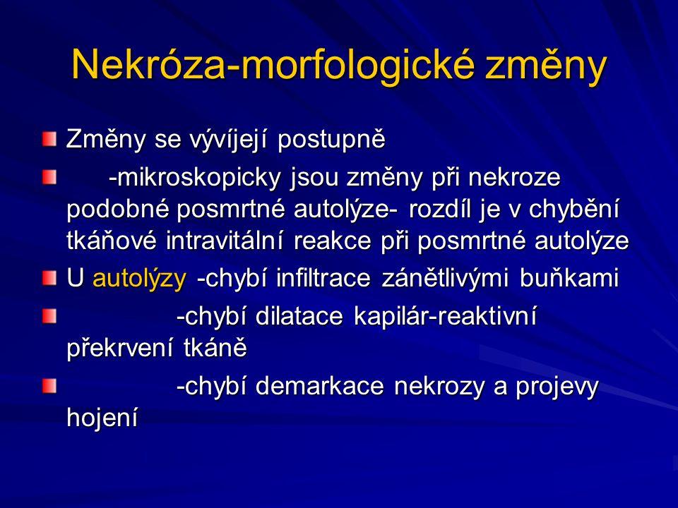 Nekróza-morfologické změny