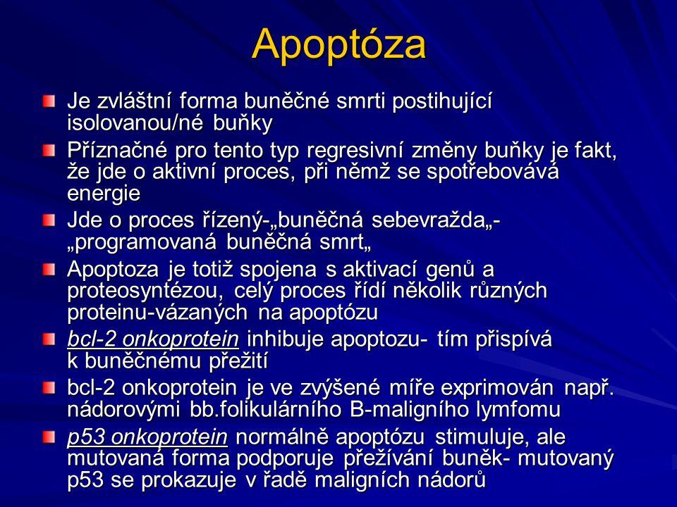 Apoptóza Je zvláštní forma buněčné smrti postihující isolovanou/né buňky.