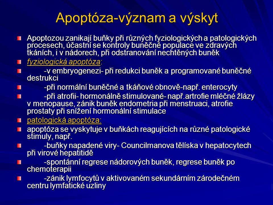 Apoptóza-význam a výskyt