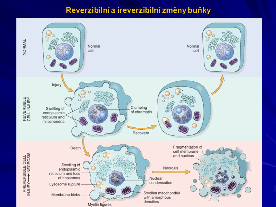 Reverzibilní a ireverzibilní změny buňky