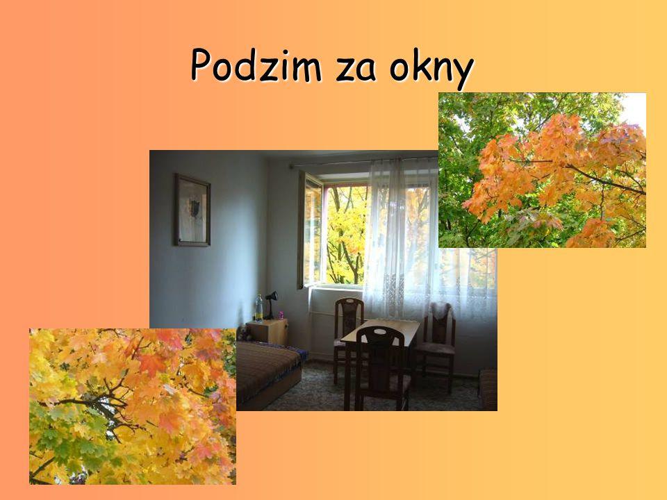 Podzim za okny
