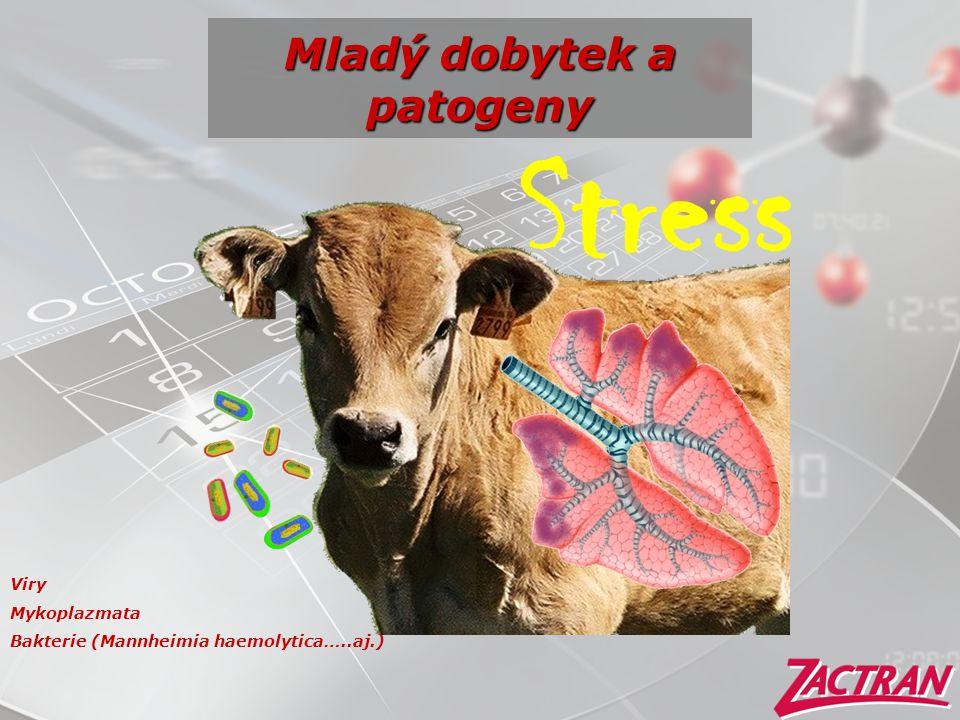 Mladý dobytek a patogeny