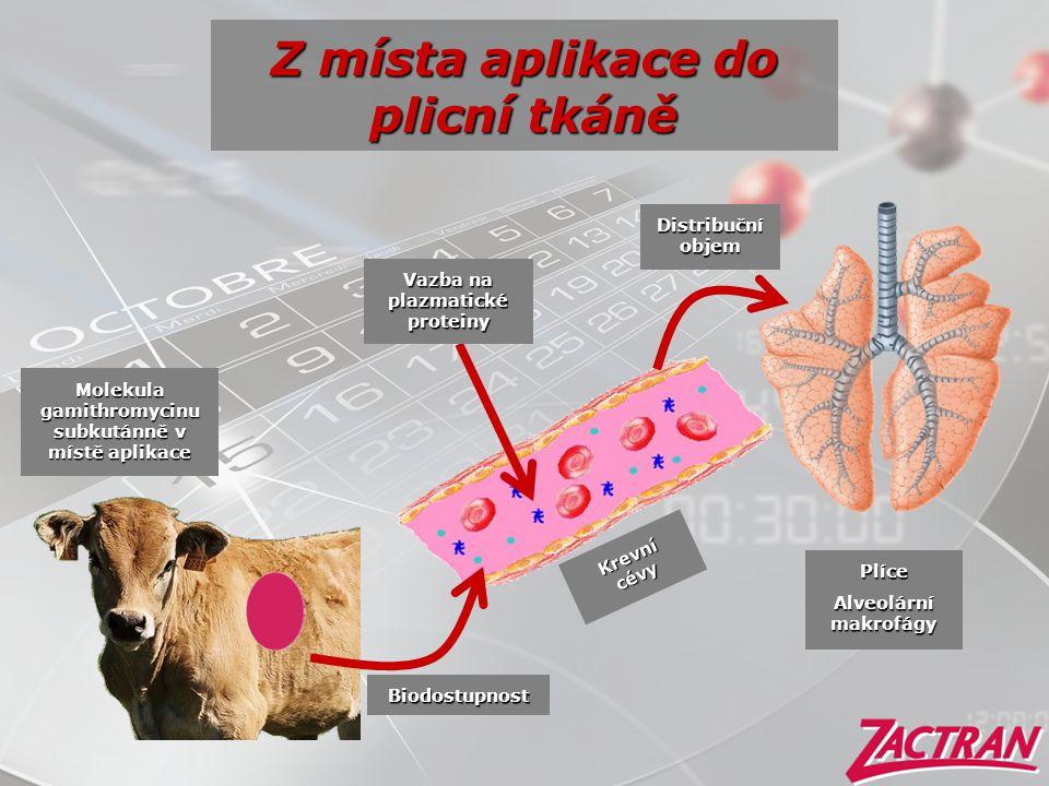 Z místa aplikace do plicní tkáně
