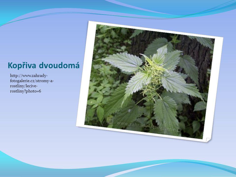Kopřiva dvoudomá http://www.zahrady- fotogalerie.cz/stromy-a- rostliny/lecive- rostliny photo=6