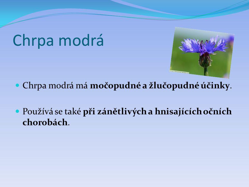 Chrpa modrá Chrpa modrá má močopudné a žlučopudné účinky.