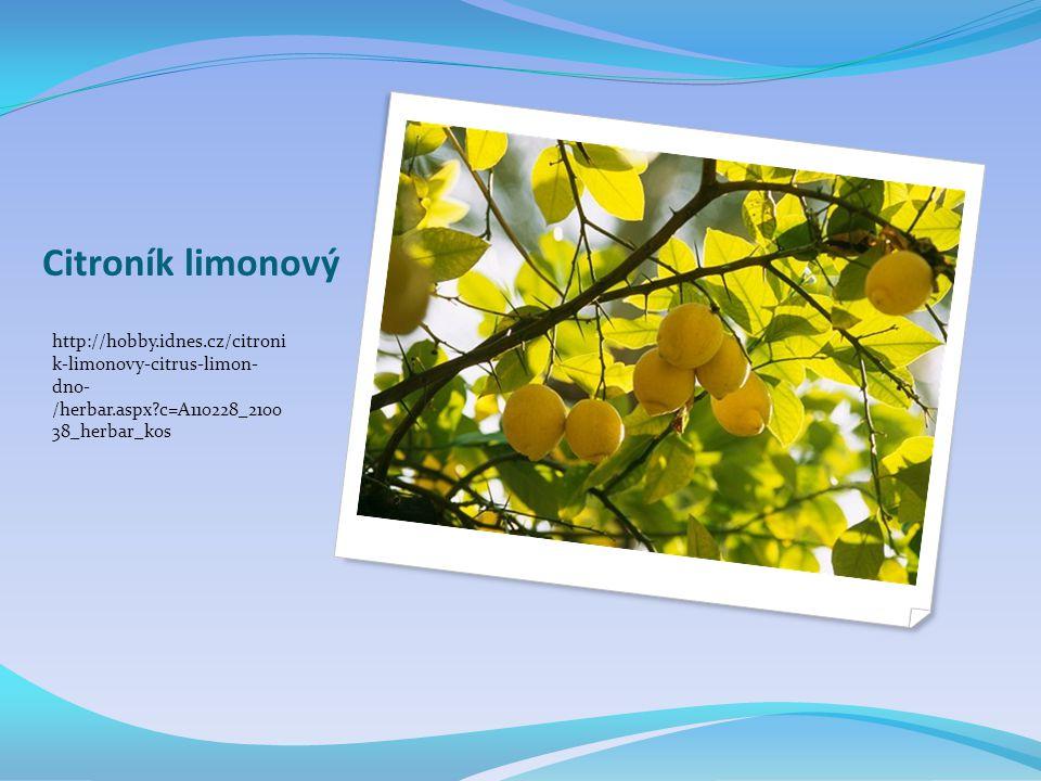 Citroník limonový http://hobby.idnes.cz/citroni k-limonovy-citrus-limon- dno- /herbar.aspx c=A110228_2100 38_herbar_kos.