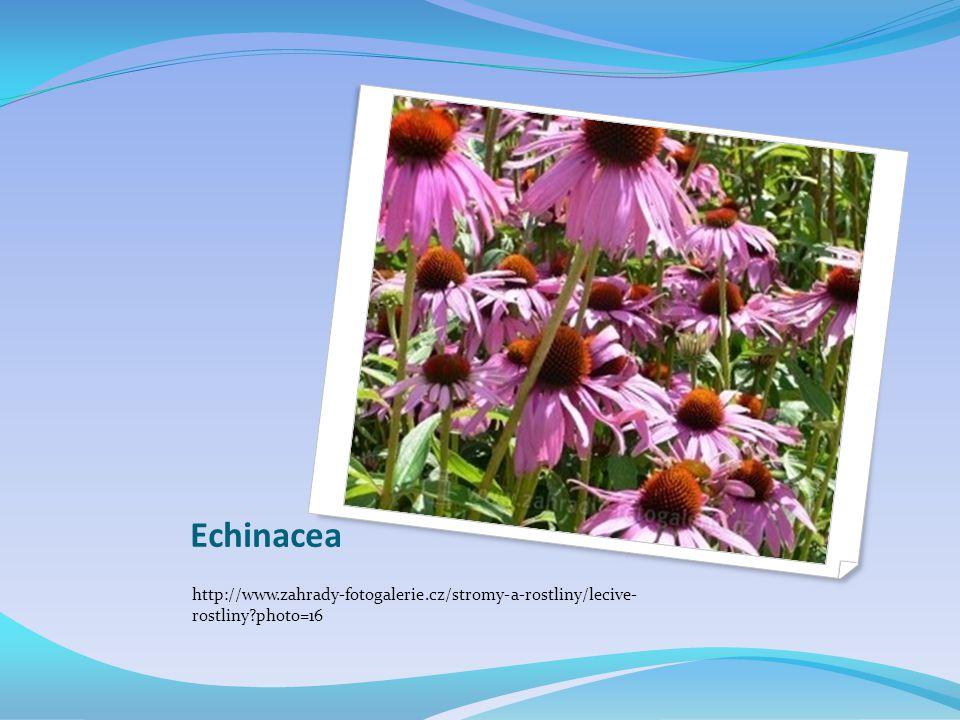 Echinacea http://www.zahrady-fotogalerie.cz/stromy-a-rostliny/lecive- rostliny photo=16