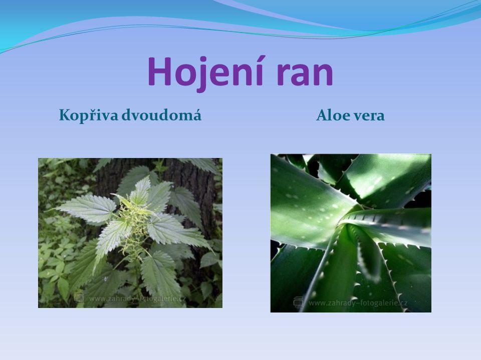 Hojení ran Kopřiva dvoudomá Aloe vera