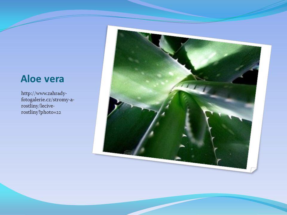 Aloe vera http://www.zahrady- fotogalerie.cz/stromy-a- rostliny/lecive- rostliny photo=22