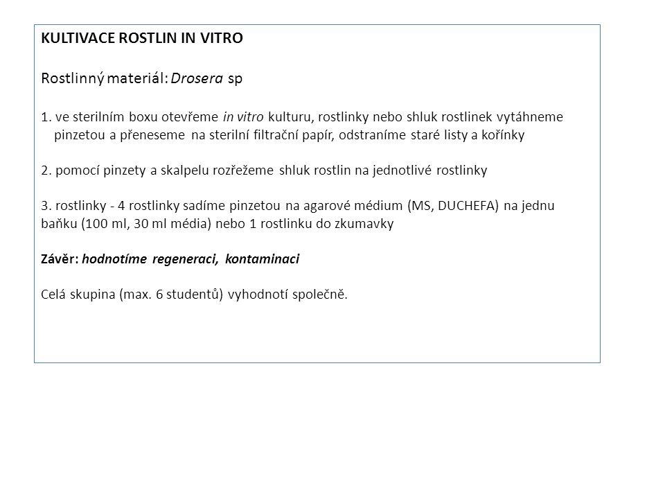 Kultivace rostlin in vitro Rostlinný materiál: Drosera sp