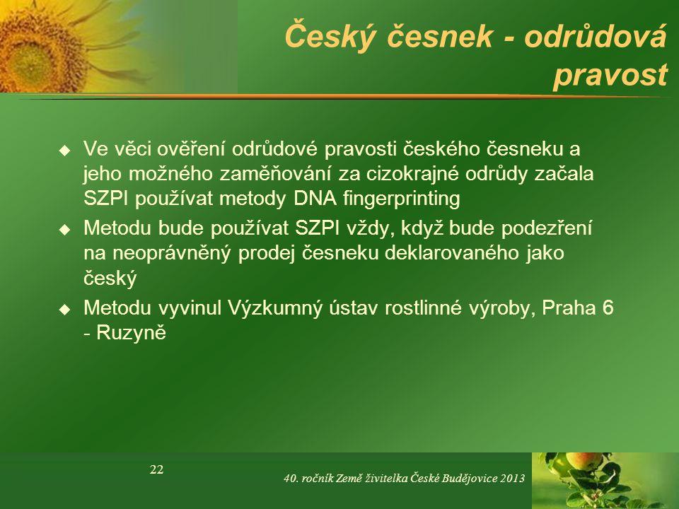 Český česnek - odrůdová pravost