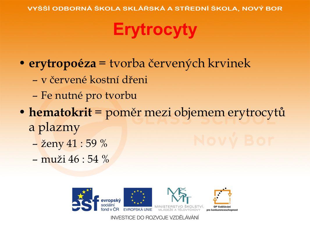 Erytrocyty erytropoéza = tvorba červených krvinek