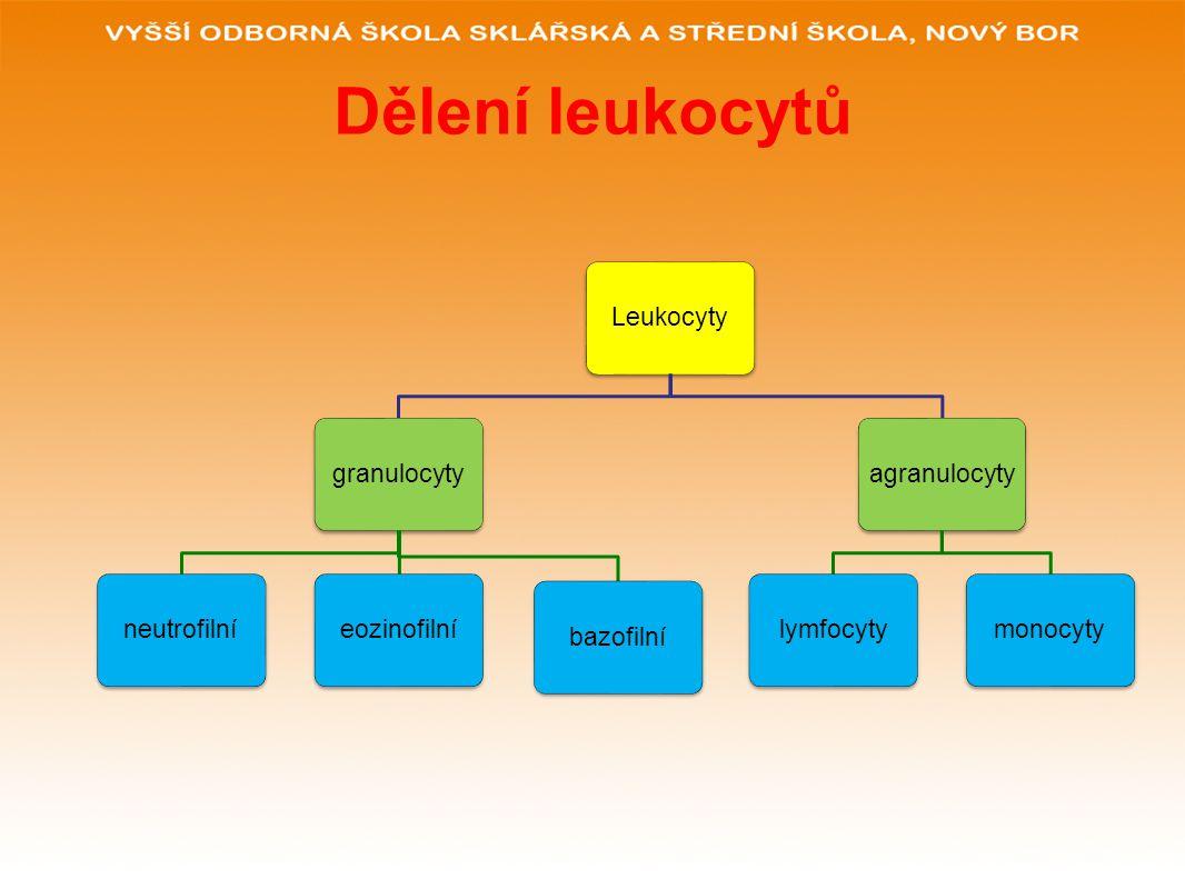 Dělení leukocytů Leukocyty granulocyty neutrofilní eozinofilní