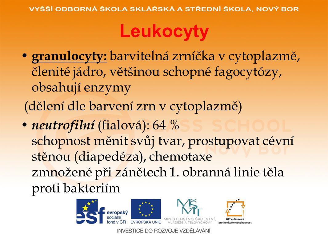 Leukocyty granulocyty: barvitelná zrníčka v cytoplazmě, členité jádro, většinou schopné fagocytózy, obsahují enzymy