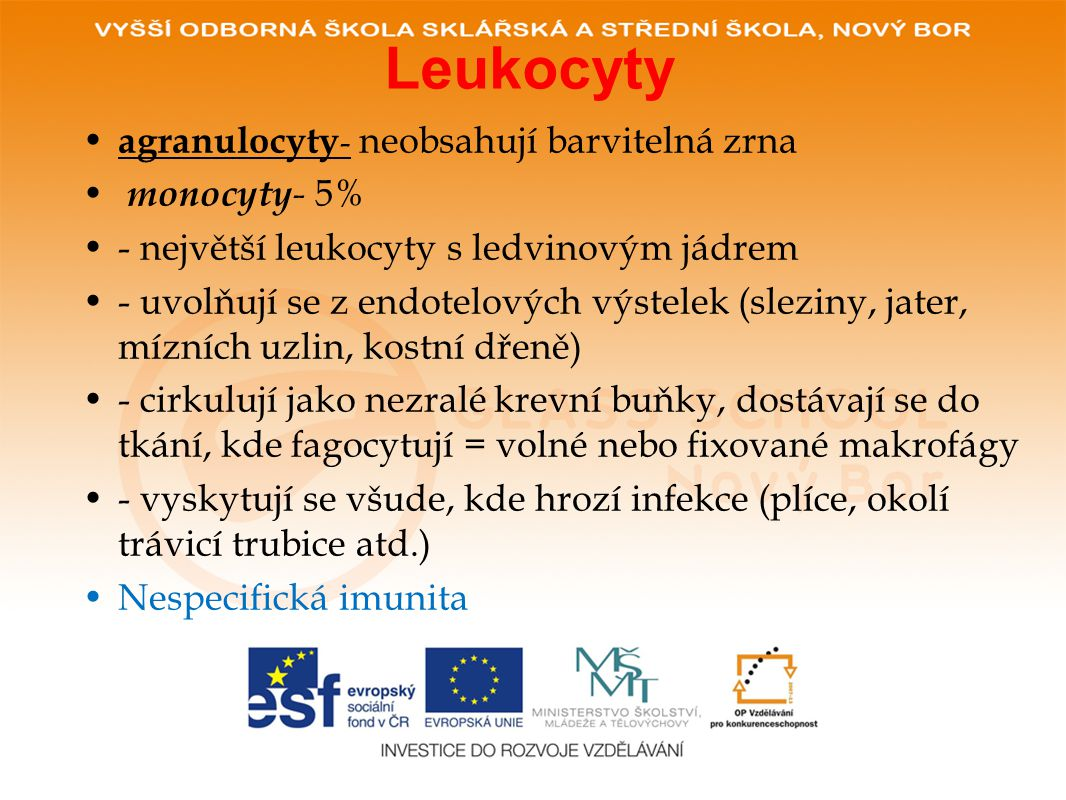 Leukocyty agranulocyty- neobsahují barvitelná zrna monocyty- 5%
