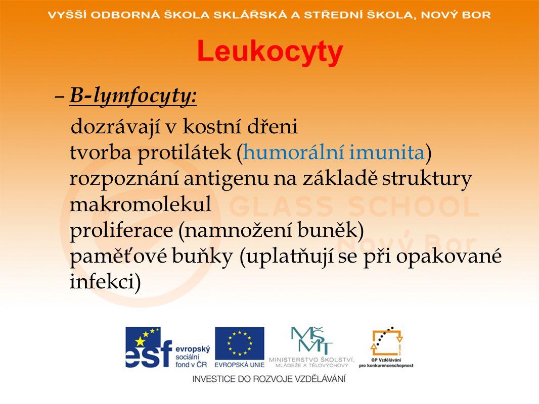 Leukocyty B-lymfocyty: