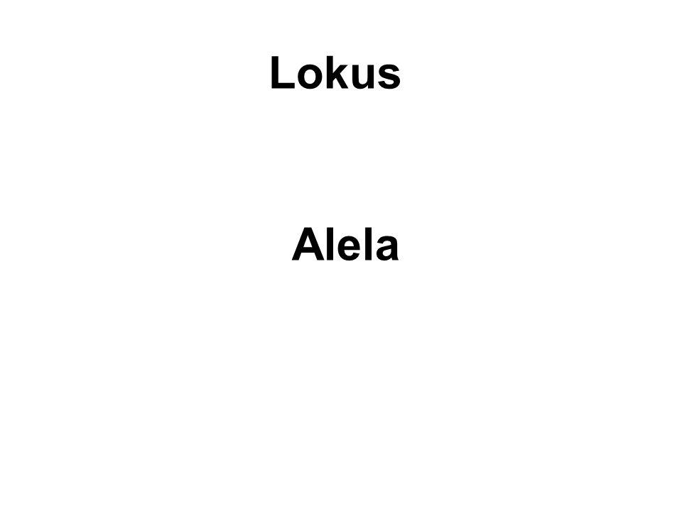 Lokus Alela