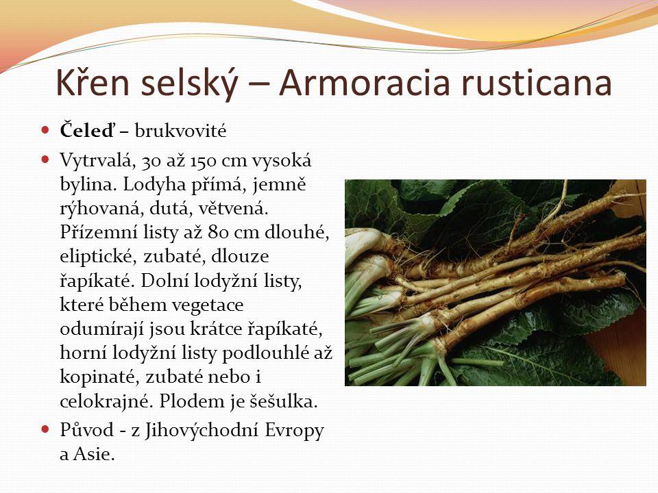 Křen selský – Armoracia rusticana