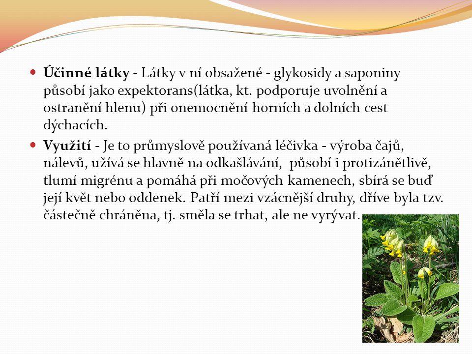 Účinné látky - Látky v ní obsažené - glykosidy a saponiny působí jako expektorans(látka, kt. podporuje uvolnění a ostranění hlenu) při onemocnění horních a dolních cest dýchacích.