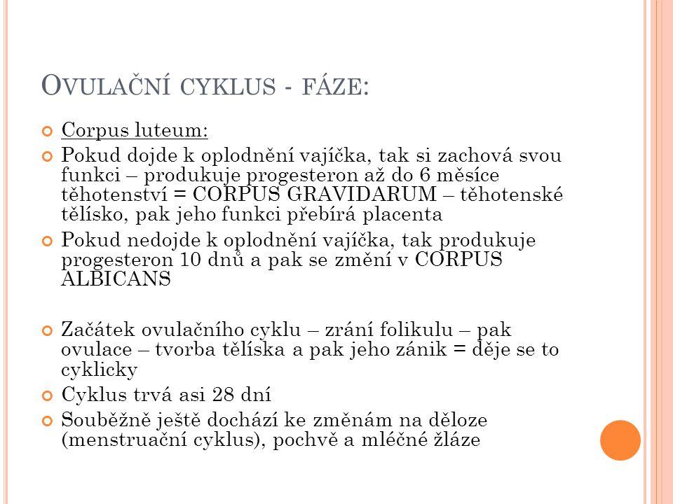 Ovulační cyklus - fáze: