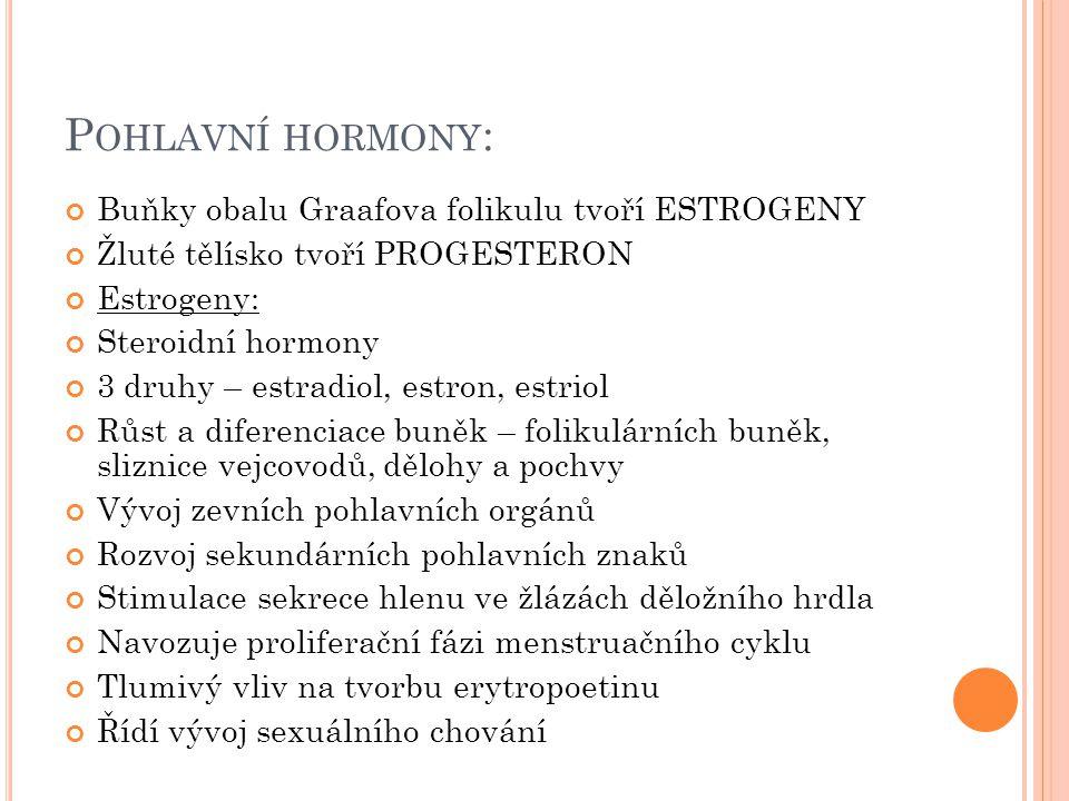 Pohlavní hormony: Buňky obalu Graafova folikulu tvoří ESTROGENY