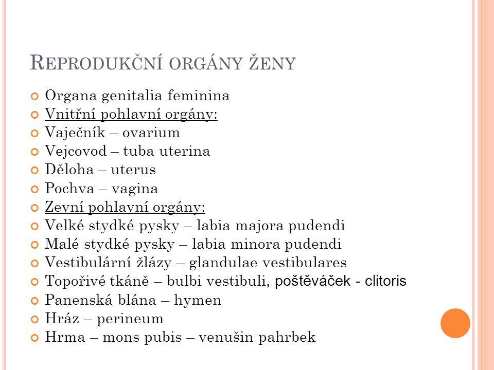 Reprodukční orgány ženy