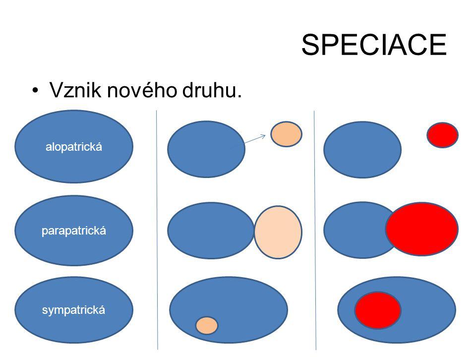 SPECIACE Vznik nového druhu. alopatrická parapatrická sympatrická