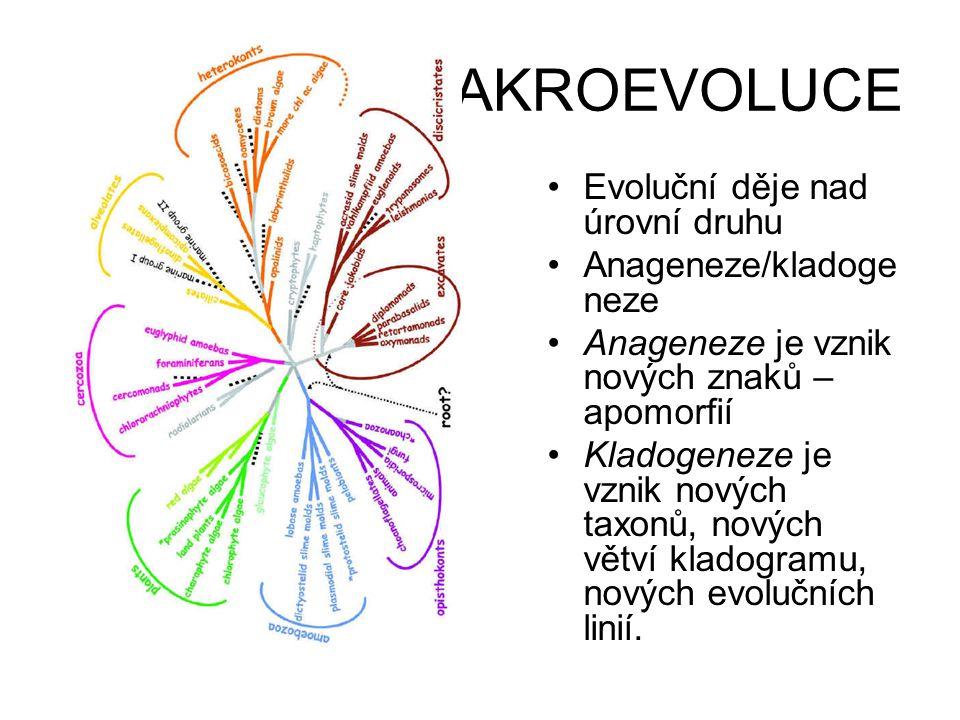 MAKROEVOLUCE Evoluční děje nad úrovní druhu Anageneze/kladogeneze