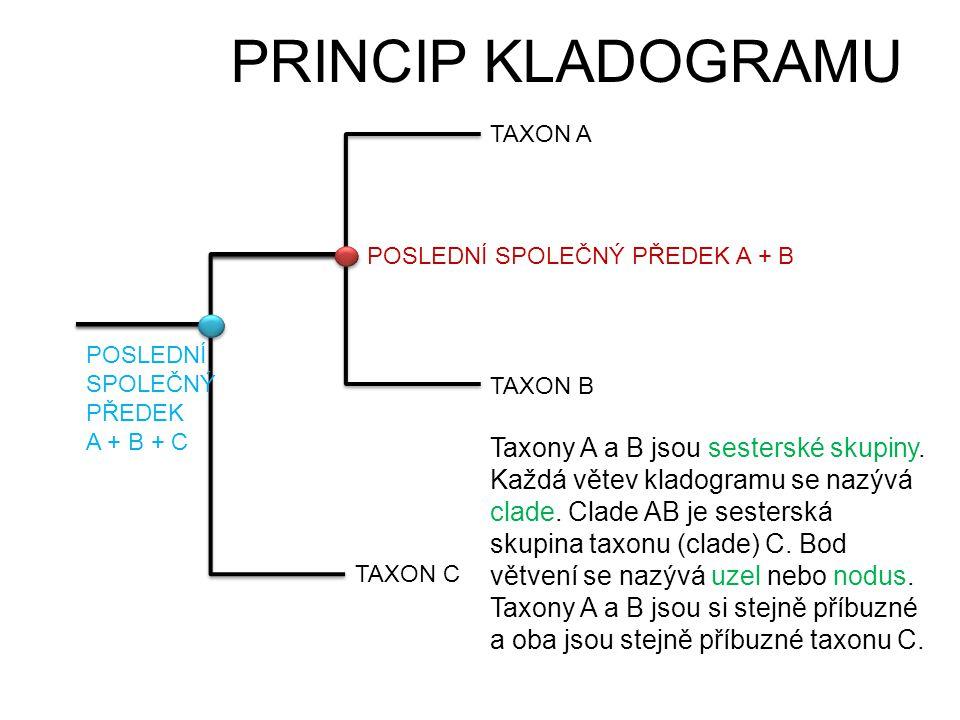 PRINCIP KLADOGRAMU TAXON A. POSLEDNÍ SPOLEČNÝ PŘEDEK A + B. POSLEDNÍ SPOLEČNÝ PŘEDEK. A + B + C.