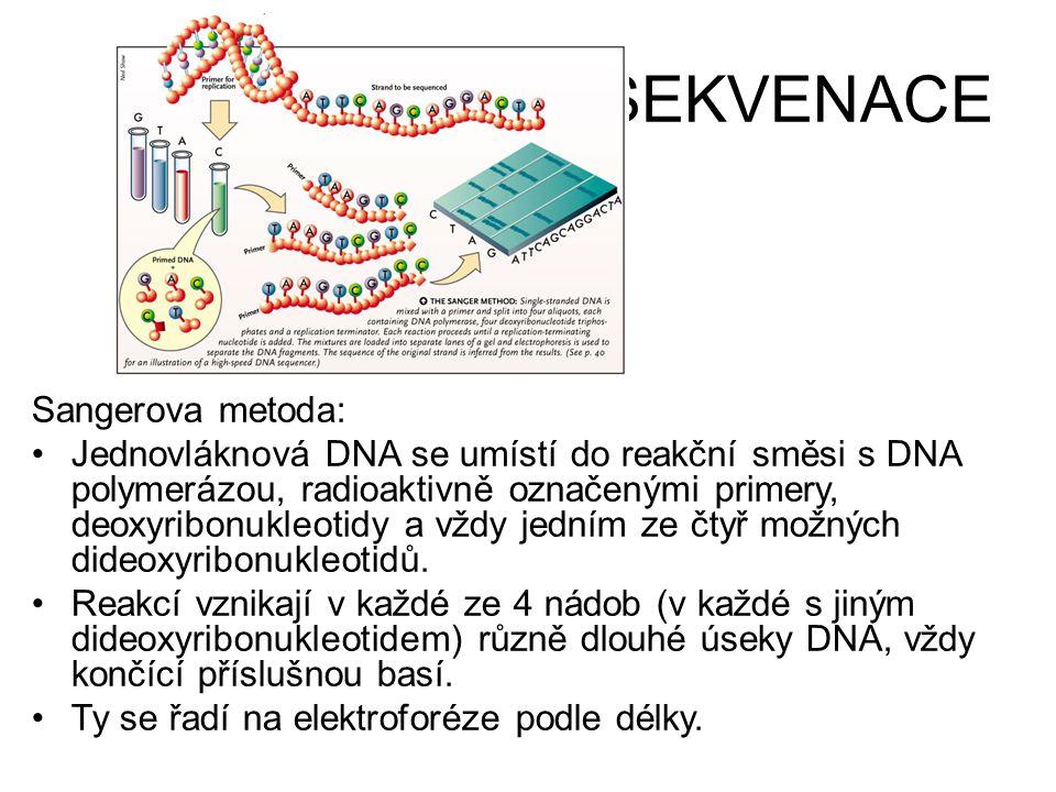 SEKVENACE Sangerova metoda: