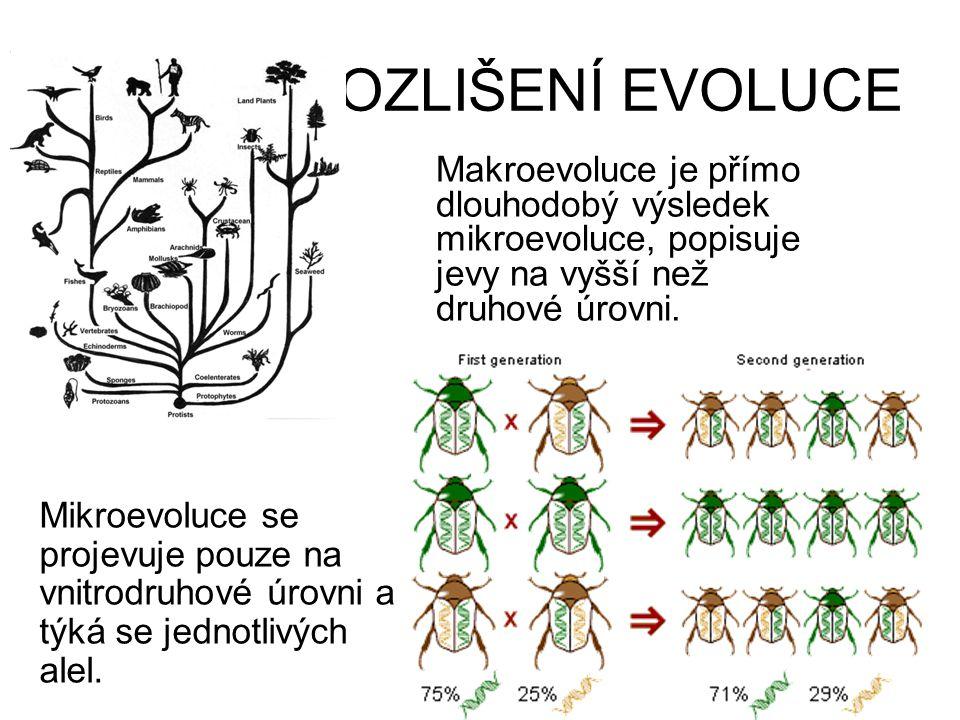ROZLIŠENÍ EVOLUCE Makroevoluce je přímo dlouhodobý výsledek mikroevoluce, popisuje jevy na vyšší než druhové úrovni.