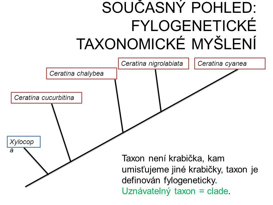 SOUČASNÝ POHLED: FYLOGENETICKÉ TAXONOMICKÉ MYŠLENÍ