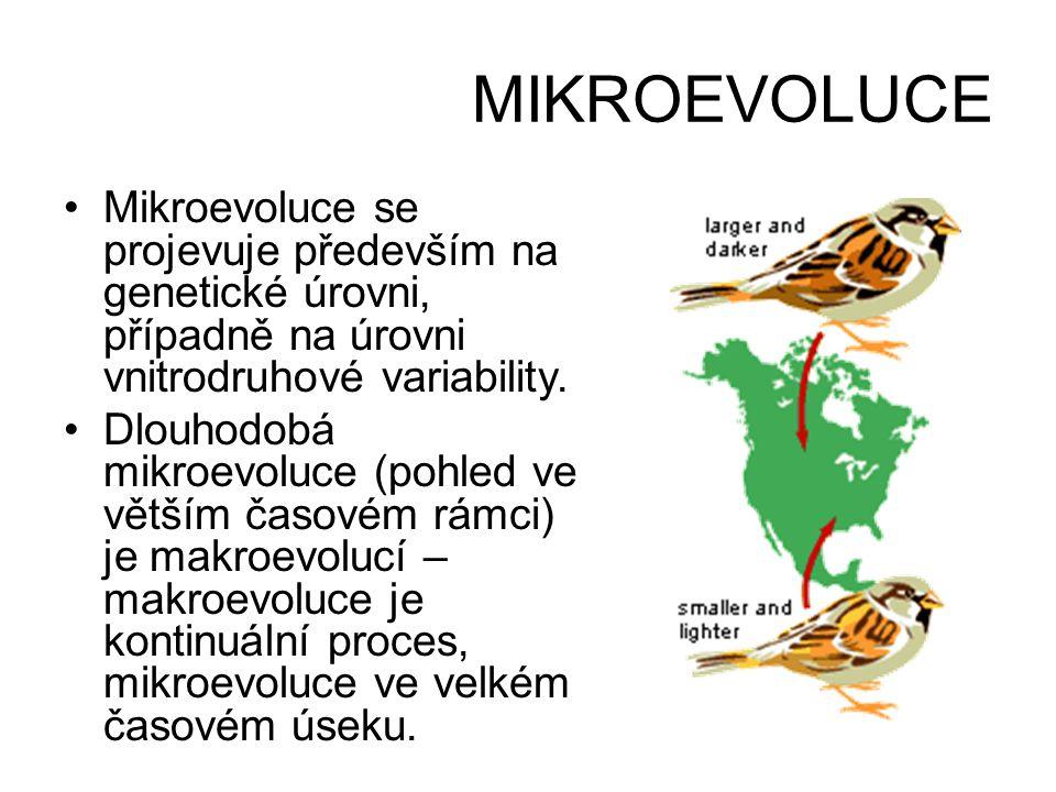 MIKROEVOLUCE Mikroevoluce se projevuje především na genetické úrovni, případně na úrovni vnitrodruhové variability.